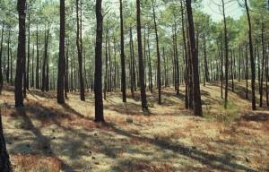 forêt d'avenir